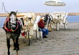 Horse riding in Chania