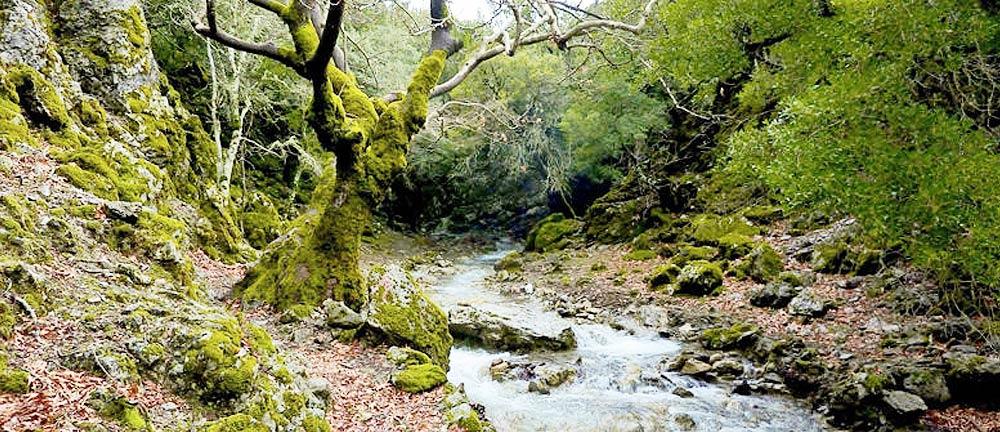 Rouvas Forest