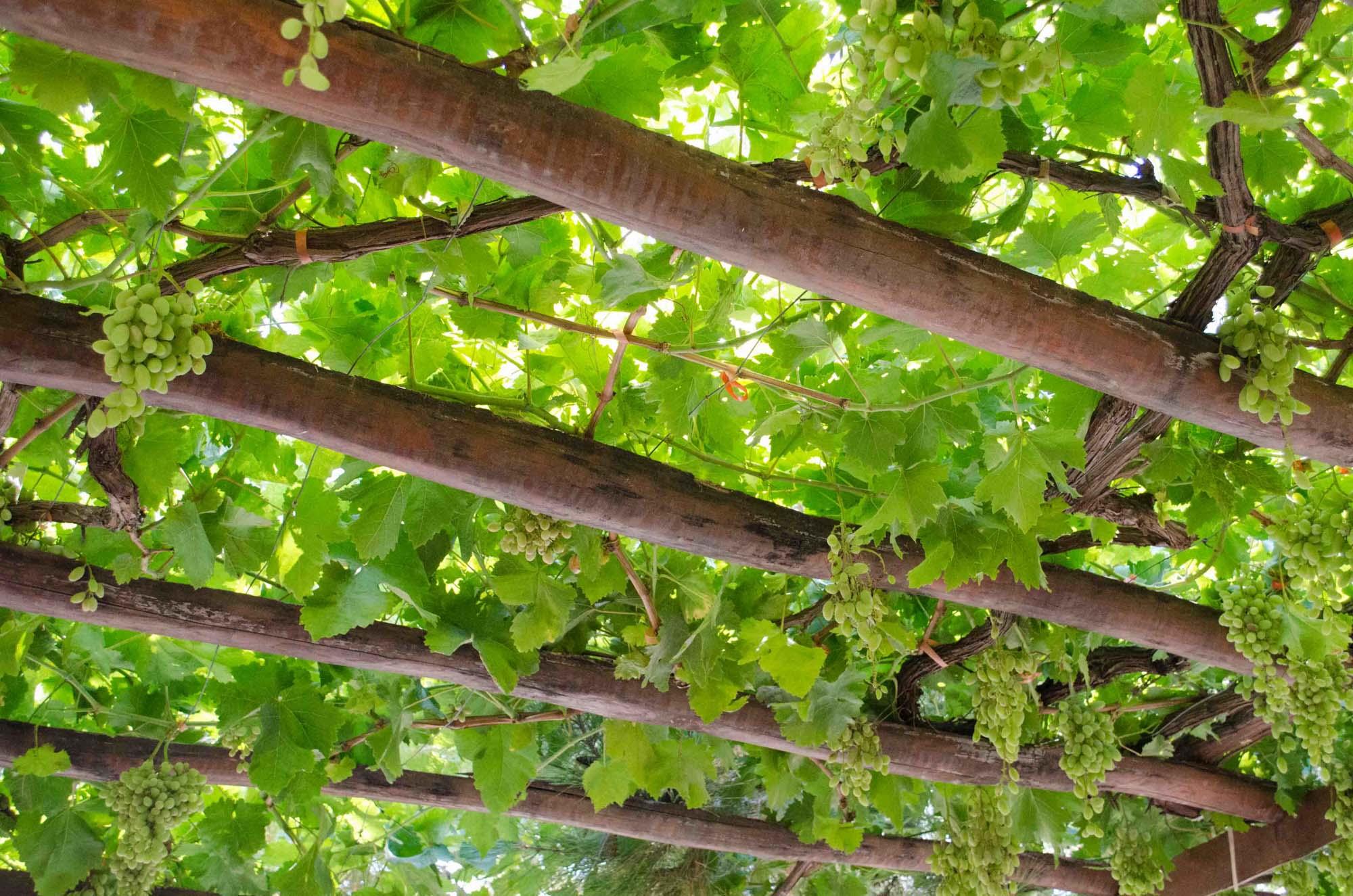 Cretan wineries-1