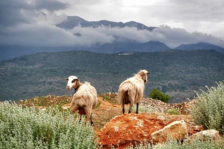 Therisos kloof Kreta