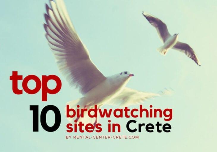 Top 10 birdwatching sites in Crete