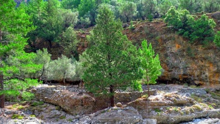 Samaria Bomen