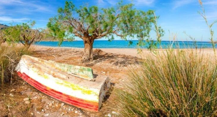 Arbre sur une plage de Kato Zakros
