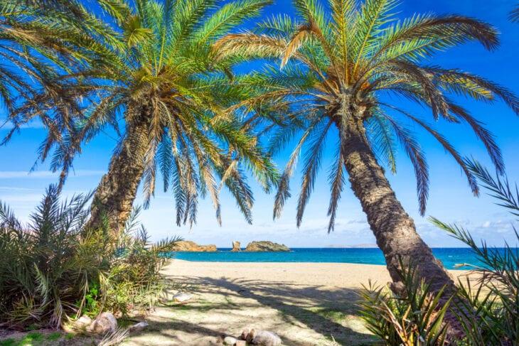 Palmy na plaży Vai