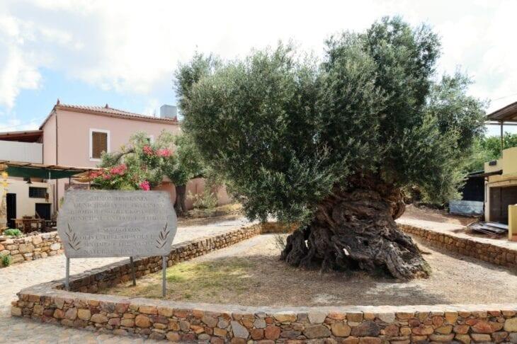 Musée des olives de Vouves