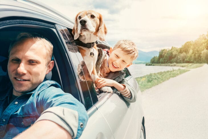 Father dog and son looking in car window