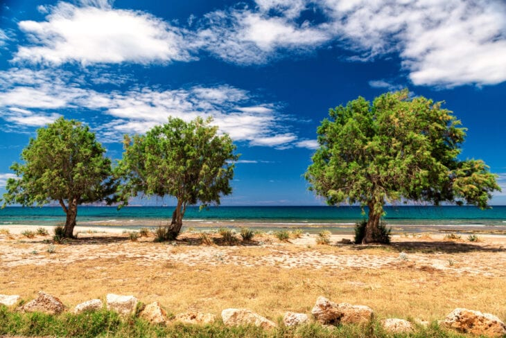 Blooming Trees in Anissaras Beach