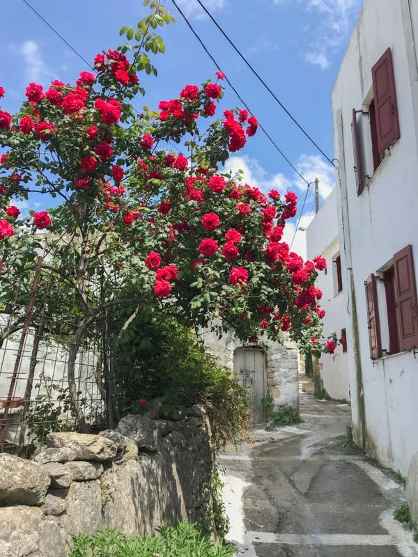 Argyroupolis Crete-7188